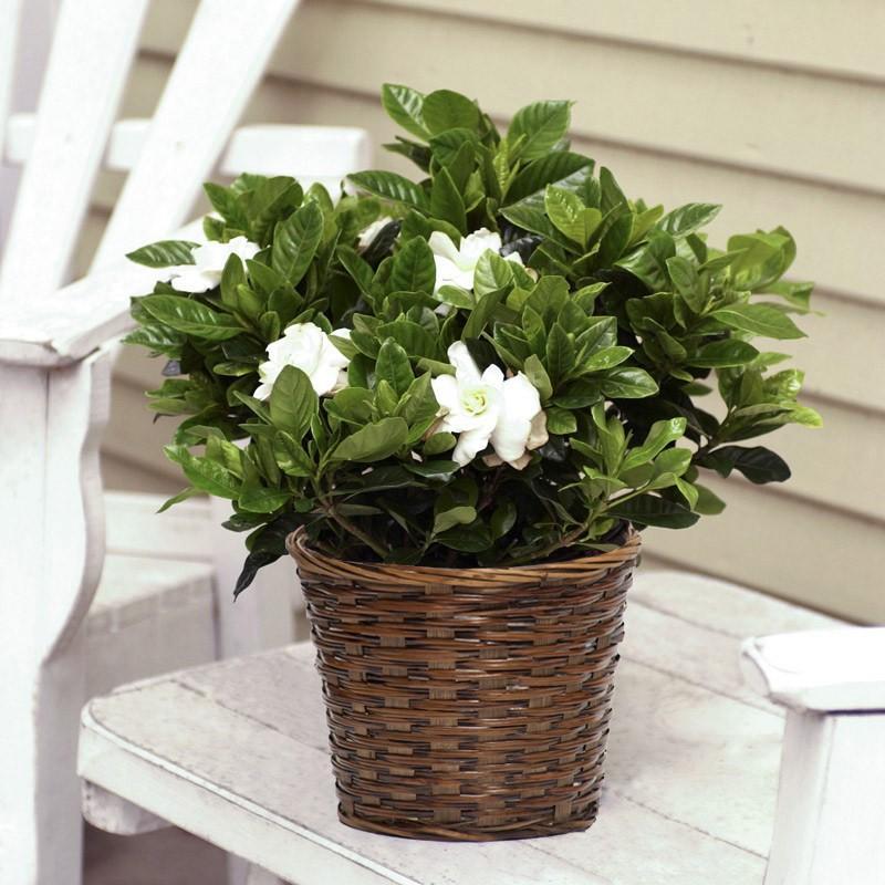 أسماء نباتات الزينة المنزلية بالصور