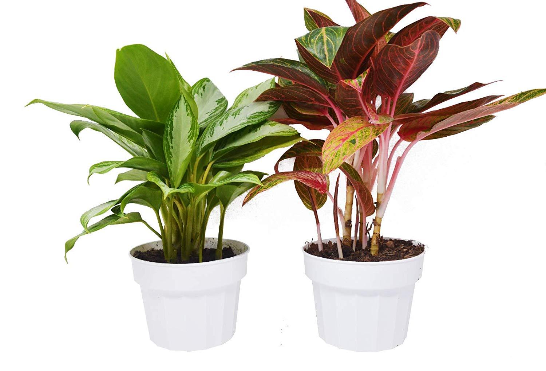 تعرف عن النباتات المنزلية التي لا تحتاج للشمس 543049725